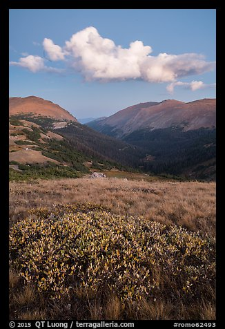 Looking down Old Fall River valley. Rocky Mountain National Park (color)