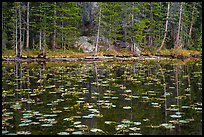 Water lillies and trees, Nymph Lake. Rocky Mountain National Park ( color)