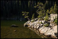 Trees on shore of Dream Lake. Rocky Mountain National Park ( color)