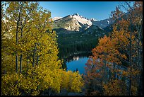 Longs Peak rising above Bear Lake and aspens in autumn foliage. Rocky Mountain National Park ( color)
