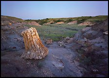 Petrified log stump at dusk, South Unit. Theodore Roosevelt National Park, North Dakota, USA. (color)