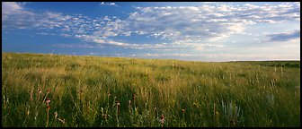 Tall grass prairie landscape. Theodore Roosevelt  National Park (Panoramic color)