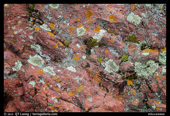 Close-up of red rocks with lichen. Theodore Roosevelt National Park, North Dakota, USA.