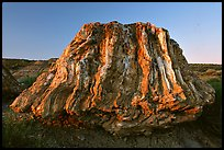 Petrified stump of ancient sequoia tree, late afternoon. Theodore Roosevelt National Park, North Dakota, USA. (color)