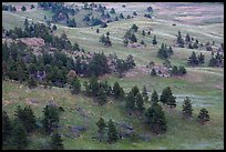 Rolling hills with ponderosa pines and grasslands. Wind Cave National Park ( color)