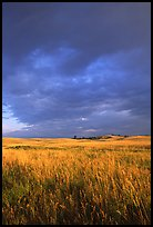 Prairie with tall grasses and dark sky, early morning. Wind Cave National Park, South Dakota, USA.