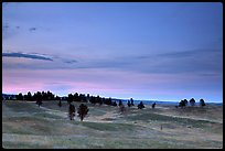 Rolling hills covered with scattered pines, dusk. Wind Cave National Park, South Dakota, USA. (color)