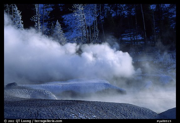 Thermal steam and frosted trees. Yellowstone National Park, Wyoming, USA.