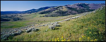 Mountain slopes with wildflowers. Yellowstone National Park (Panoramic color)