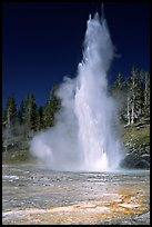 Grand Geyser,  tallest of the regularly erupting geysers in the Park. Yellowstone National Park, Wyoming, USA. (color)