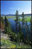 Trees and bend of the Yellowstone River, Hayden Valley. Yellowstone National Park ( color)
