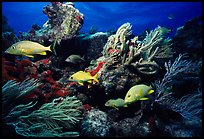 Pictures of Tropical Fish