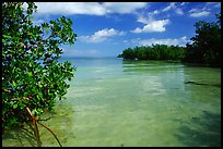 Mangrove forest on fringe of Elliott Key, mid-day. Biscayne National Park, Florida, USA.
