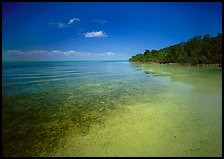 Shoreline and seagrass on Elliott Key near the harbor. Biscayne National Park, Florida, USA. (color)