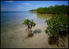 Depositional coastal environment with mangrove on Elliott Key, afternoon. Biscayne National Park, Florida, USA.