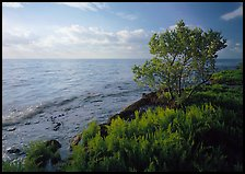 Saltwarts plants and tree on oceanside coast, early morning, Elliott Key. Biscayne National Park, Florida, USA.