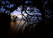 Silhouetted mangroves at dusk. Biscayne National Park, Florida, USA.