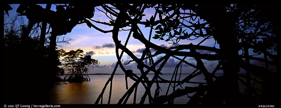 View over Florida Bay through mangrove branches at sunset. Biscayne National Park (color)