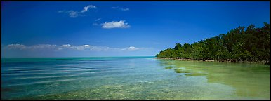Mangrove shoreline on Florida Bay. Biscayne National Park (Panoramic color)