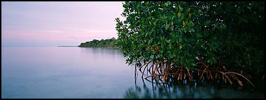 Florida Bay shore at dusk. Biscayne National Park (Panoramic color)