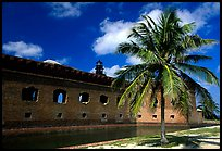 Palm tree and Fort Jefferson. Dry Tortugas National Park, Florida, USA.