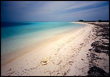 Tropical beach on Bush Key with conch shell and beached seaweed. Dry Tortugas National Park, Florida, USA.
