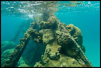 Coral-covered part of Windjammer wreck breaking surface. Dry Tortugas National Park ( color)