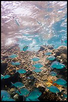 Tropical fish around Avanti wreck. Dry Tortugas National Park ( color)