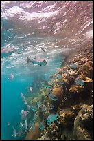Marine wildlife around Windjammer Wreck. Dry Tortugas National Park, Florida, USA. (color)