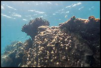 Coral-covered wreck of Windjammer. Dry Tortugas National Park ( color)