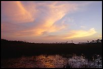 Dawn on marsh and sawgrass prairie. Everglades National Park, Florida, USA. (color)