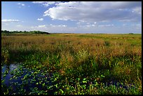 Marsh near Ahinga trail, late afternoon. Everglades National Park, Florida, USA.