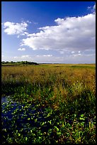 Freshwater marsh with aquatic plants and sawgrass near Ahinga trail, late afternoon. Everglades National Park, Florida, USA. (color)