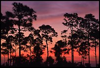 Pictures of Everglades NP