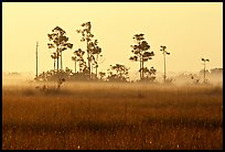 Pineland environment at sunrise, near Mahogany Hammock. Everglades National Park, Florida, USA.