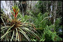 Pictures of Bromeliads