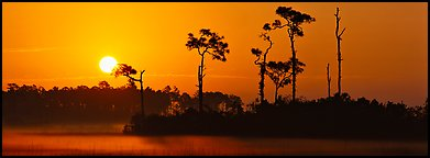 Sun rises above isolated pine trees. Everglades  National Park (Panoramic color)