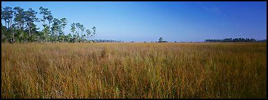 Sawgrass landscape. Everglades  National Park (Panoramic color)