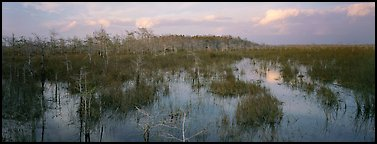 Swamp landscape in the evening. Everglades  National Park (Panoramic color)