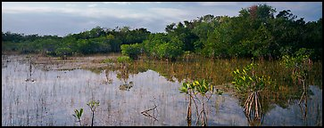 Mixed Marsh landscape with mangroves. Everglades  National Park (Panoramic color)