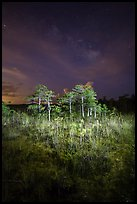 Dwarf cypress and stars at night, Pa-hay-okee. Everglades National Park, Florida, USA. (color)