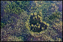 Aerial view of a cypress hole. Everglades National Park ( color)