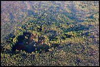 Aerial view of hole in dense cypress forest. Everglades National Park, Florida, USA. (color)