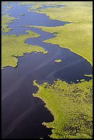 Aerial view of dense mangrove coastline and inlets. Everglades National Park ( color)