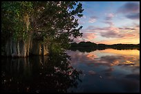 Trees with Spanish Moss in Paurotis Pond at sunset. Everglades National Park ( color)