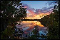 Paurotis Pond at sunset. Everglades National Park, Florida, USA. (color)