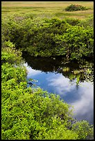 Pond from above, Shark Valley. Everglades National Park ( color)