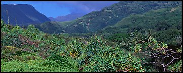 Tropical landscape with luxuriant vegetation on slopes. Haleakala National Park (Panoramic color)