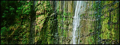 Verdant cliff with tropical waterfall. Haleakala National Park (Panoramic color)