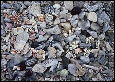 Beached coral, Tau Island. National Park of American Samoa ( color)